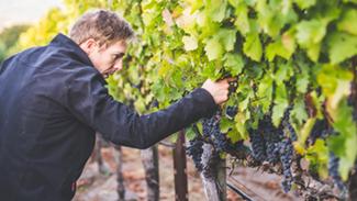 BlairGuthrie_Winemaker-325